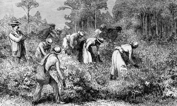Plantation Slaves working the fields