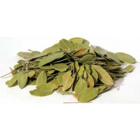 Bearberry Mexican Whole 1oz (uva Ursi)