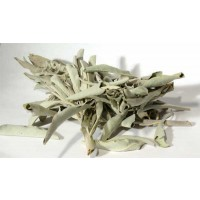 White Sage 1oz (salvia Apiana)