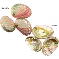 "2"" - 3"" Abalone Shell Incense Burner"