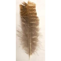 Barred Wing Smudging Feather