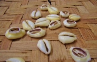 Cowrie Shell Divination