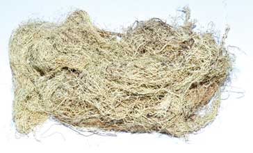 Usnea Lichen Whole 2oz